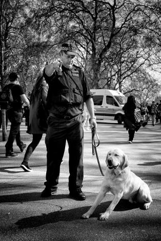 cop-dog-pot